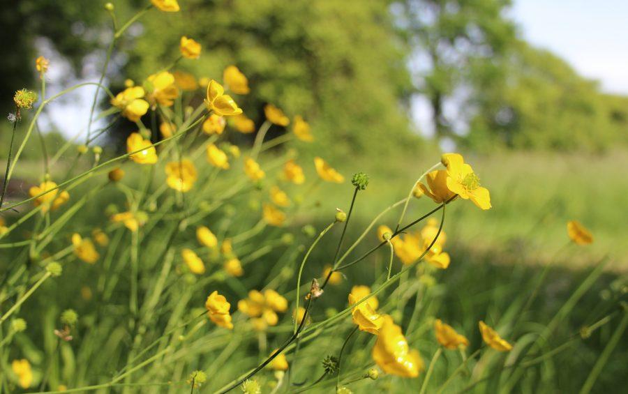 fleurs camping lac de Neguenou