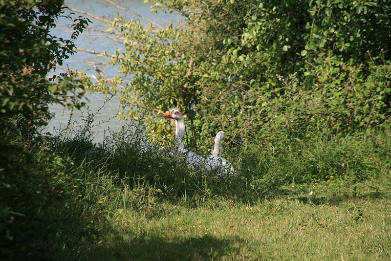 Camping pêche Lot et Garonne